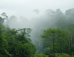 cloud forest, Sandakan
