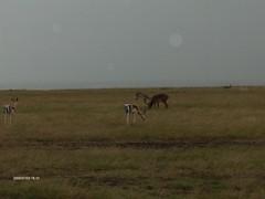 HPIM1504 (http://jvverde.birdsby.me/v2/) Tags: kenya qunia viagens frias travel africa