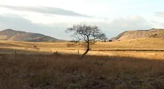 Tiny Tree in the Strath (Magdalen Green Photography) Tags: tiny tree strath vale tayside dundee scotland scottish sky hills albaluminis ilovenature lonelytree appreciation
