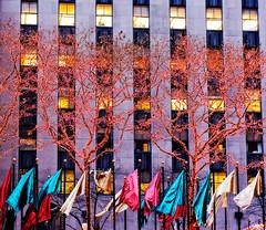 more christmas in new york... (sesame ellis) Tags: trees red green gold manhattan rockefellercenter flags christmaslights