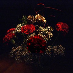 A Christmas bouquet for all your kind wishes. Flickr is keeping me sane  :) - by Pickersgill Reef