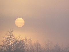 december sunrise (e) Tags: son zon soleil haze mist trees sunrise zonsopgang flanders december winter albaluminis seasons signoftheseasons