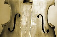 Double Bass and Single Love (A-Wop-Bop-A-Loo-Bop!) Tags: doublebass strings monochrome blackwhite wood fholes bridgeless halleorchestra halle stringedinstrument grain weathered nobridge topphotoblog