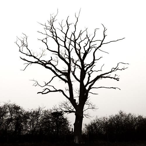 Dead Trees Fog Dead Tree Dead Tree