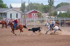 Team Roping in Vega (DustyReins) Tags: horse cowboy texas rodeo vega horsesatwork goldenspread horsesatworkpod