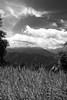 Bukit Tinggi #13 (r47z™ @ Cris Chen ©) Tags: blackandwhite landscape nikon scenery view malaysia 1755mmf28g kualalumpur d200 bukittinggi highmountains nikond200 scoreme35 blackandwhitelandscape judgmentday54 crischen