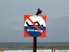 Guard Crow (Rajendran Rajesh™) Tags: beach boats hut boating tyre pondicherry chumbaar