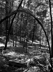 archway (contrecoeur) Tags: deleteme5 deleteme8 bw deleteme deleteme2 deleteme3 deleteme4 deleteme6 deleteme9 deleteme7 forest bed deleteme10 branches ceremony