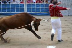 PICT4636 (mll) Tags: france cow vache gascony gascogne gers borde courselandaise castraverduzan