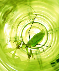 Praying for deliverance? (Ch@rTy) Tags: green bug mantis insect weird topv333 topc75 praying 100v10f prayingmantis mushi  wwwcharlietyackcom charlietyackcom