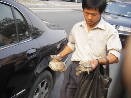 Car-to-Car Turtle Sales by you.