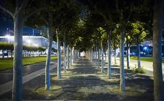 San Francisco Trees at Night (Thomas Hawk) Tags: sanfrancisco california street city trees usa tree night buildings lights unitedstates time outdoor 10 walk flag unitedstatesofamerica walkway ways civiccenter fav10