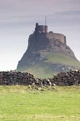 Lindisfarne Castle (~Glen B~) Tags: uk england castle field stone wall northumberland holyisland lindisfarne
