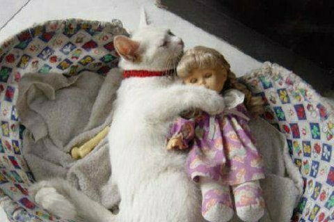 Kitty and doll