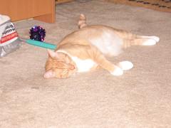 Jack (BronzePolgara) Tags: animals 2006 kitties