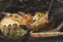 """Spider upclose and personal • <a style=""""font-size:0.8em;"""" href=""""http://www.flickr.com/photos/57024565@N00/254754466/"""" target=""""_blank"""">View on Flickr</a>"""
