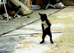 (Masakazu Ikeguchi) Tags: animal japan cat blackcat explore d200 fukuoka  straycat  outstandingshots cat1000 thecatwhoturnedonandoff