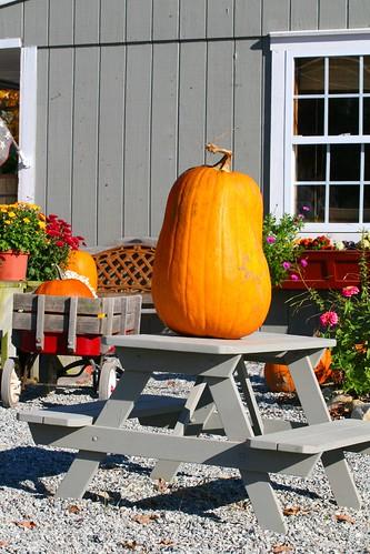 big pumpkin, small table