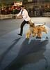 Bundessiegerzuchtschau 2006 - Afghanischer Windhund - Schönheitschampion