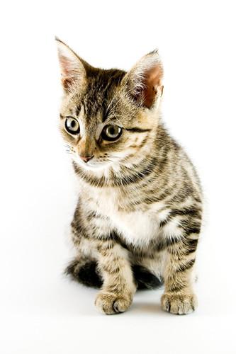 Cat in Photo Slideshow