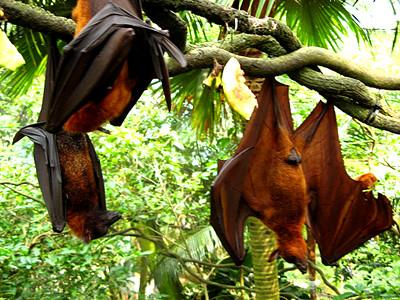 Daytime Bats