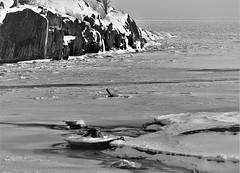 6Q3A2870 (www.ilkkajukarainen.fi) Tags: suomi suomi100 finland finlande happy life helsinki winter talvi ulkoilu travel traveling eu europa scandinavia nature landscape maisema luoto snow lumi uunisaari blackandwhite monochrome mustavalkoinen