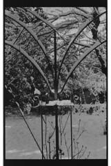 P59-2018-026 (lianefinch) Tags: argentique argentic analogique analog blackandwhite blackwhite bw noirblanc noiretblanc nb monochrome neige snow arbre tree jardin garden outdoor extérieur arches