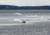 diminishing ice w/ducks (kerwilliger) Tags: madison wisconsin lake mendota ice mallard duck