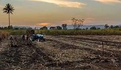 Day's Harvest (views@vista) Tags: clouds dusk evening farmers fields harvest landscape nature outdoor rural sky sugarcane sunset tractor beacheslandscape