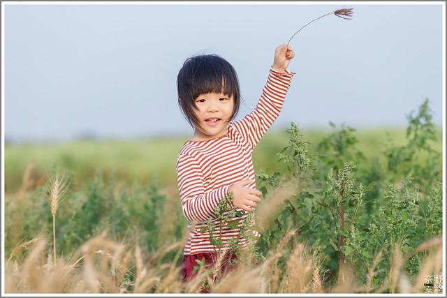 3月台南 親子寫真可以這樣拍 木棉花 蜀葵 小麥 一次讓你拍個夠 (59)