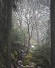 Nakolinnanmäki (tommi.vuorinen) Tags: paimio turku finland tree fog mist landscape nature forest atmospheric framing mystic mysterious fineart canon vivitar vintage lens
