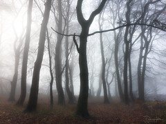 Misty Trees (Dave Holder) Tags: mist trees landscape fog canon yorkshire