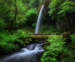 Oregon Oasis (Mark Metternich) Tags: ngc northwest oregon forest markmetternichcom markmetternich workshops workshop tours tour trees tree stream cascades cascade cascading river columbiarivergorge dreamscape dreamy dream surreal surrealscape water waterfall waterfalls waterfalle offtrail hiking adventure guide guiding remote fog foggy postprocessing education video tutorials