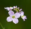 Flowers (LuckyMeyer) Tags: flower fleur makro grren lila pastell spring blume blüte garden