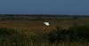 04-18-18-0013205 (Lake Worth) Tags: animal animals bird birds birdwatcher everglades southflorida feathers florida nature outdoor outdoors waterbirds wetlands wildlife wings