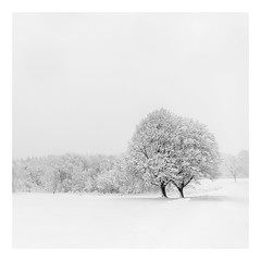 Love Everlasting (bprice0715) Tags: canon canoneos5dmarkiii canon5dmarkiii landscape landscapephotography nature naturephotography beautiful beauty beautyinnature blackandwhite bw blackwhite macro monochrome highkey winter snow snowylandscape snowing blizzard cold frigid fineart trees