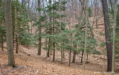 Pines and Dunes (mswan777) Tags: outdoor nature leaf tree pine dune landscape scenic michigan bridgman forest wood hill nikon d5100 nikkor 1855mm spring season tall pattern