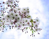 Hello Spring.. (Imagine8 Photography) Tags: scotland highlands scottishhighlands spring sunshine bluesky blossom blooms flower flora imagine8photography