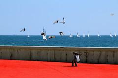 Una giornata di vento (meghimeg) Tags: 2018 sanremo regata vento wind bambino boy rosso red barche sail vele uccelli birds mare sea acqua water persone people