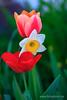 Frühlingsblumen (Fotoalbom.de) Tags: blueme fruehling