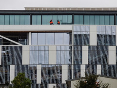 So Many Windows and So Few Cleaners (Steve Taylor (Photography)) Tags: windowcleaners architecture building window orange teal brown black blue glass men workmen newzealand nz southisland canterbury christchurch city cbd trees shiny reflection pattern
