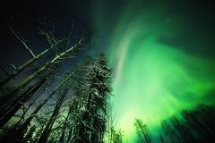 a lazy Aurora (yan08865) Tags: wood tree alaska aurora north pole night landscape sky nature trees earth space science winter borealis northern lights snow canon wide stars greatphotographers