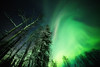 a lazy Aurora (yan08865) Tags: wood tree alaska aurora north pole night landscape sky nature trees earth space science winter borealis northern lights snow canon wide stars greatphotographers