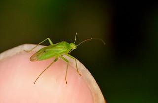Bug IMG_1065