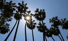 Buona estate! Enjoy Summer! (Raffa2112) Tags: spagna spain seville siviglia palme palmtrees sole sun controluce backlight estate summer canoneos750d raffa2112 silhouette