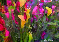 Lilies (brillianthues) Tags: flowers floral flower garden nature lilies colorful collage photography photmanuplation photoshop