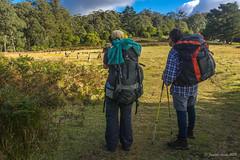Green Gully Track: kangaroos near the end (NettyA) Tags: australia cedarcreeklodge easterngreykangaroo greengullytrack nsw oxleywildriversnationalpark bushwalk bushwalking day4 hiking trees eucalyptus eucalypts track bushwalkers hikers