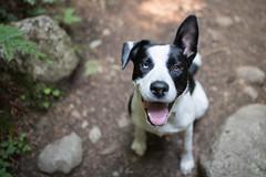 Bruce (luke.me.up) Tags: nikon d850 28mm 28mm14e pet puppy dog animal