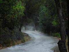 through the mist (panoskaralis) Tags: road tree mist fog grass forest water trees pine roadtrip path footpath wood nature outdoor landscape lesvos lesvosisland mytilene greece greek hellas hellenic greekisland greeksummer aegean aegeansea nikon nikonb700