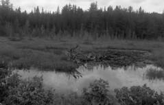DA3200_008 (Eric Hartke) Tags: nikonf100 135 ilforddelta3200 nikkor173528 algonquinprovincialpark filmphotography